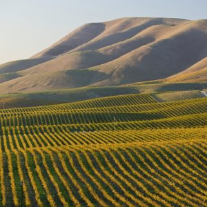 california wine region